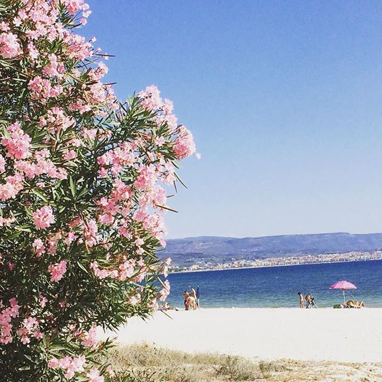 nature, tree, beauty in nature, day, scenics, water, sea, clear sky, outdoors, mountain, beach, flower, men, sky, pets, mammal, people
