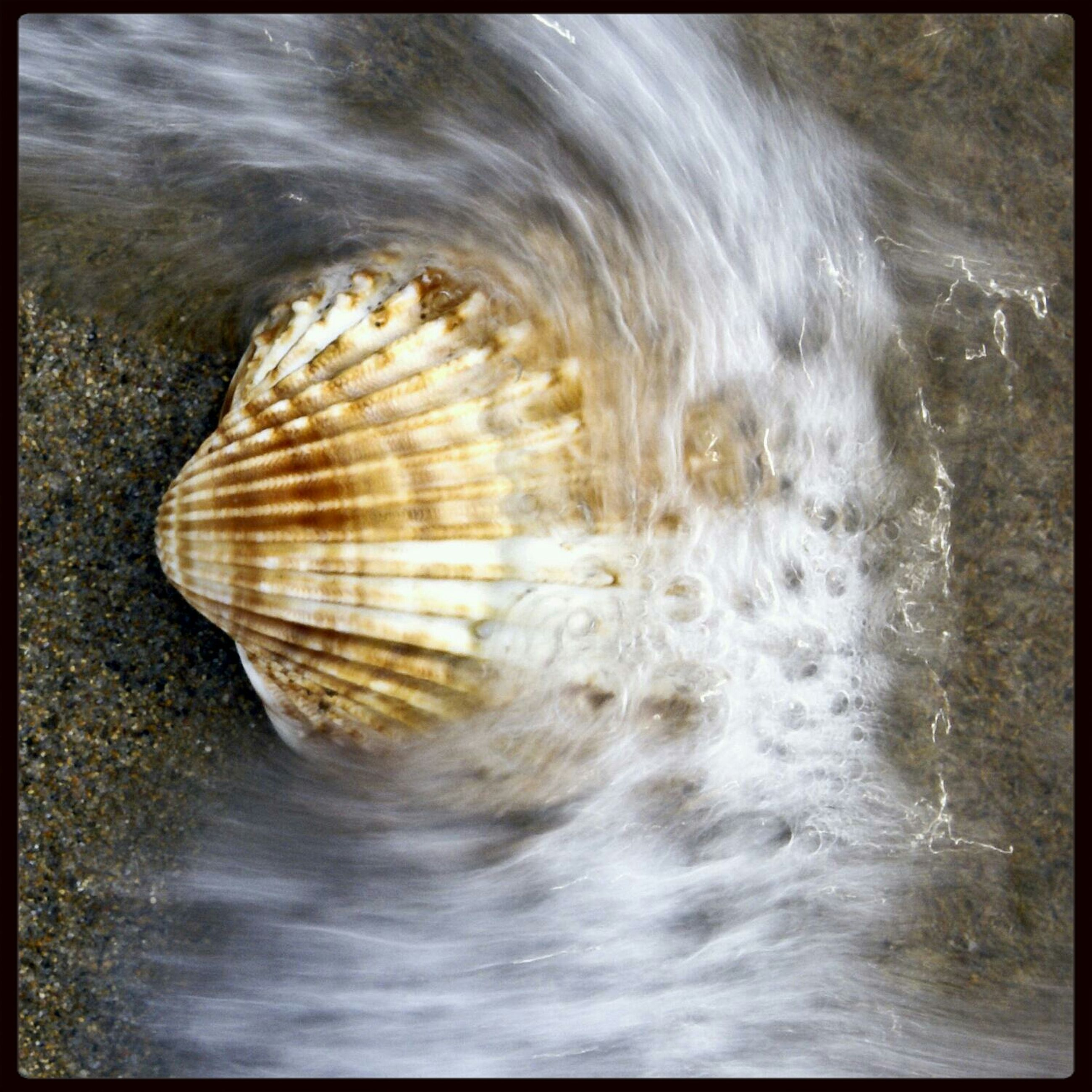 transfer print, auto post production filter, water, close-up, nature, natural pattern, beauty in nature, motion, no people, high angle view, pattern, outdoors, textured, full frame, day, wet, backgrounds, rock - object, waterfront, animal shell