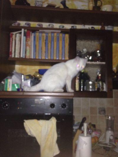 The cat is on the FORNO L'erbadelvicinoèsemprepiúgatta