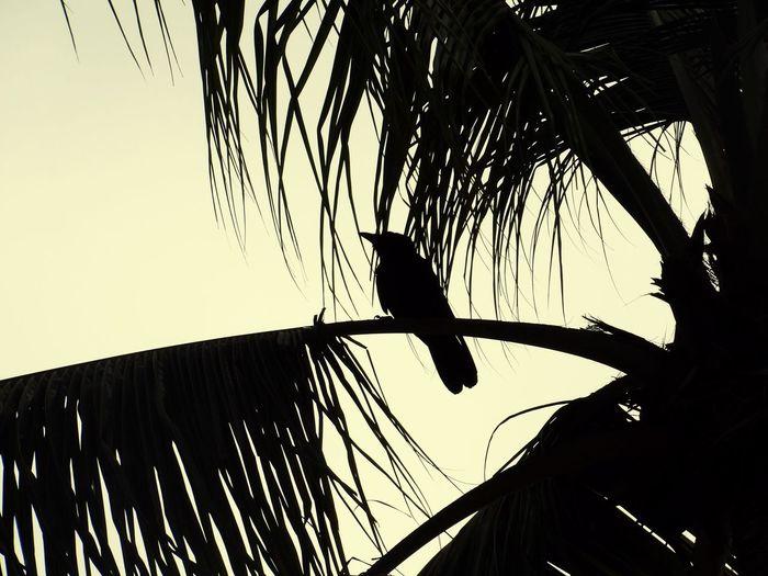 Birds Bird Tree Beach Monochrome