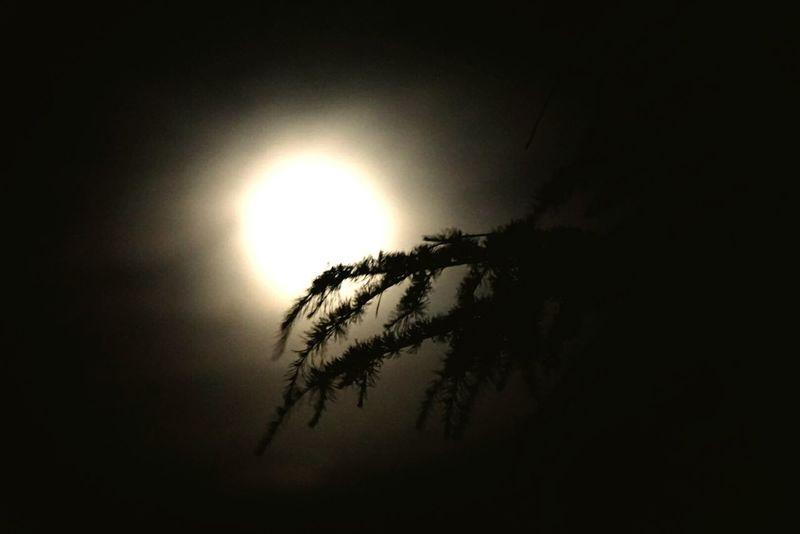 Full Moon Night  Kasauli Hills Pinetrees Beautiful View