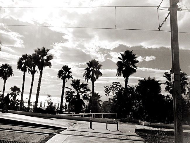Nature In The City Palm Tree Sea And Sky Tranquil Scene taken as my bus passing by the Poseidonos Coastal Avenue for Bnw_friday_eyeemchallenge Returning Home Where There Is Light, There Is Love. ... See What I See ✨💜made in Athens