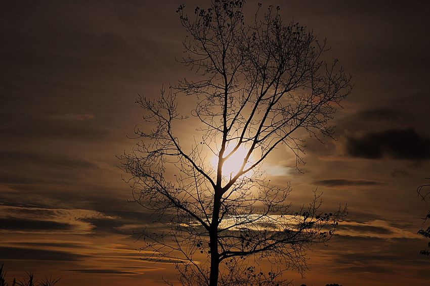 EyeEm Selects Sky Sunset Beauty In Nature Nature Cloud - Sky Plant Tranquility Tree Dramatic Sky Tranquil Scene Scenics - Nature Silhouette Environment Orange Color Sun Idyllic