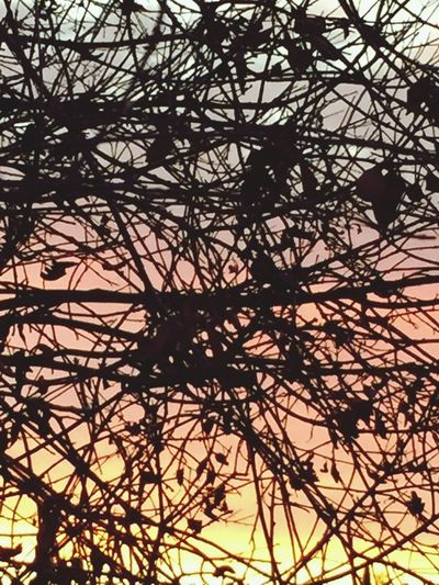 Sunset_collection Branches And Sky with iPhone 6+. Watching sun setting through the branches.