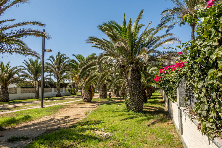 Palm Tree Plant Tropical Climate Tree Growth Sky Nature Green Color No People Day Grass Beauty In Nature Footpath Sunlight Outdoors Tranquility Clear Sky Park - Man Made Space Field Park Tropical Tree Coconut Palm Tree Almería SPAIN