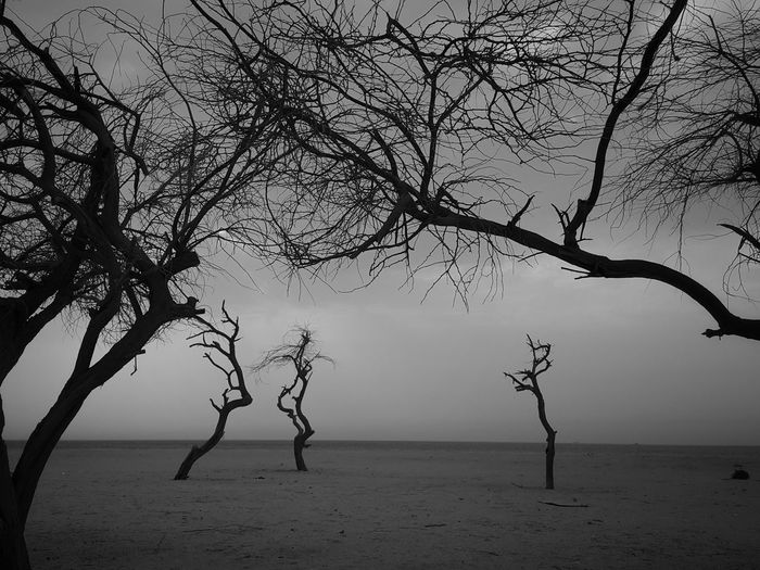 Tree Water Sea Branch No People Tranquility Horizon Over Water Beach Landscape Silhouette Deserted Scapes Neighborhood Map Black & White The Great Outdoors - 2017 EyeEm Awards