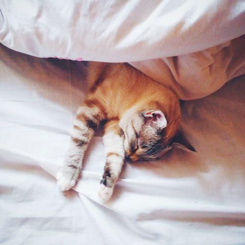 Sleepy Cat Cats 🐱 Catslife Animals