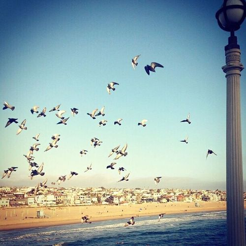 California Manhattanbeach Nature_collection Paradise California Love Love ♥ Landscape_photography Loveit Beautiful Day Amazing Blessed  Beautiful Beachphotography Beach Life Colors Birds