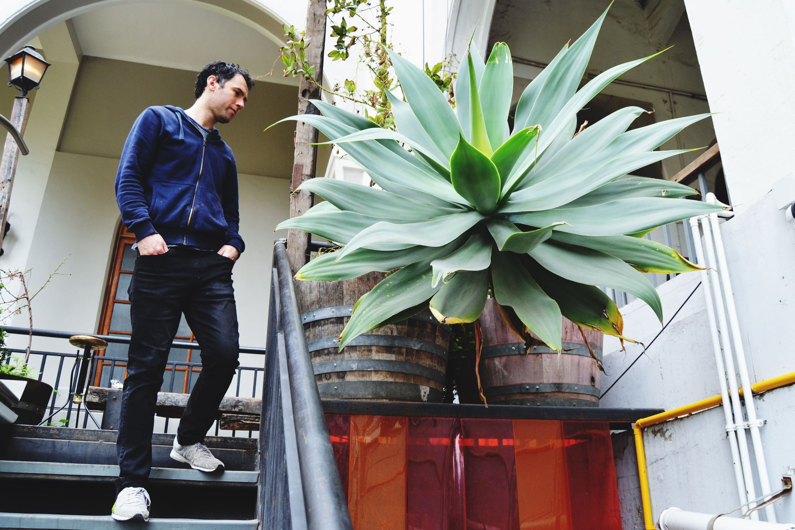 full length, potted plant, growth, casual clothing, plant, architecture, person, young adult, day, outdoors, green color
