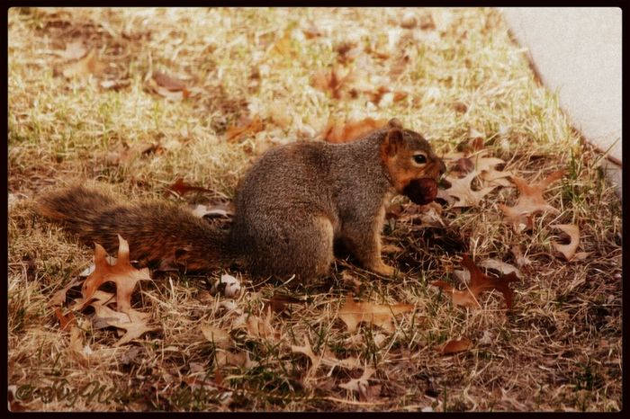 """Found It!"" Animals Squirrels Feeding Squirrels Nature #TinyCreatures #FoundIt #LostAndFound #TreasureHunt #FurBabies #nuts #Walnut #DigIt #StreamZooFamily"
