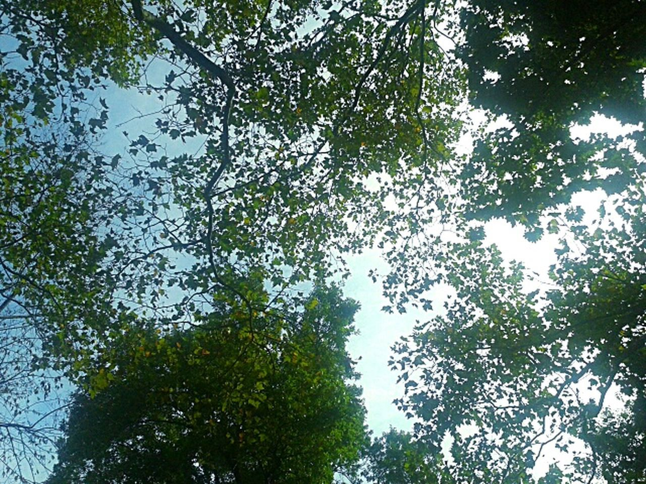 tree, low angle view, nature, growth, beauty in nature, forest, branch, outdoors, green color, no people, day, sky, leaf, scenics, backgrounds, tree area, freshness