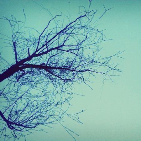 꽃구경갔으나 여긴 아직 겨울나무.....인천대공원