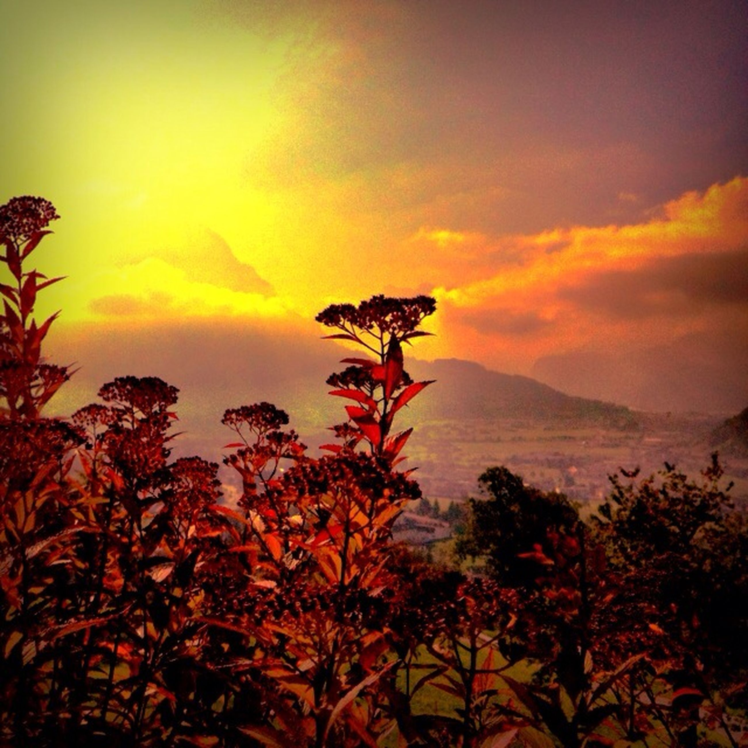 sunset, sky, beauty in nature, orange color, scenics, tranquil scene, tranquility, nature, cloud - sky, growth, plant, idyllic, silhouette, tree, dramatic sky, cloud, landscape, mountain, flower, outdoors