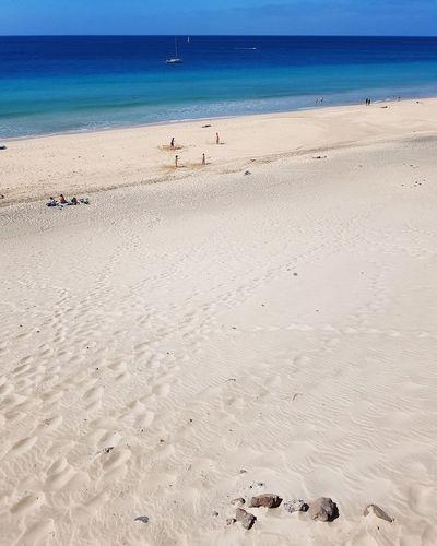 Bird Water Sea Beach Sea Life Swimming Sand Summer Shore Sandy Beach Ocean Coastline Horizon Over Water