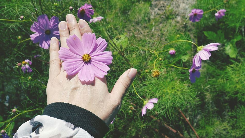 Portrait Of A Woman Selfportrait Eyemphotography EyeEm Nature Lover Nature Photography Flowerlovers コスモス 指輪 Ring 誰か指輪ください。笑