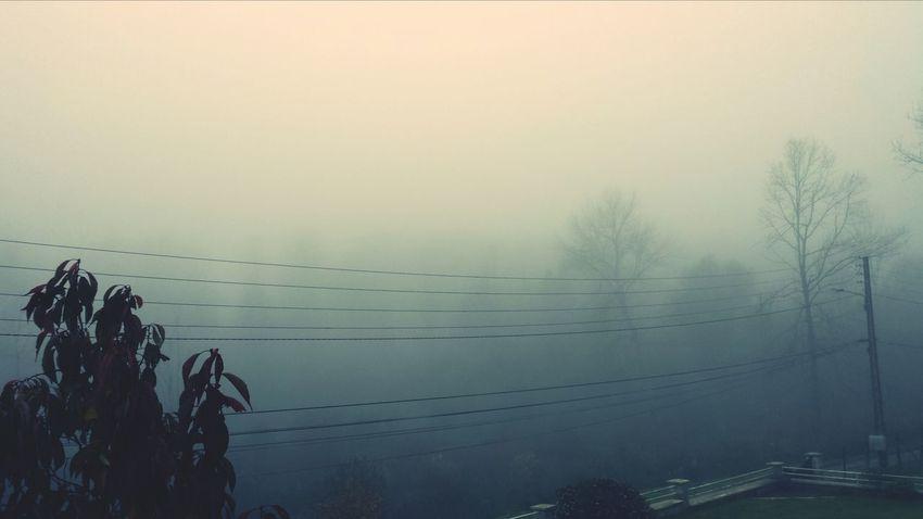 Brouillard Matinal Hugging A Tree Photos Around You Taking Photos