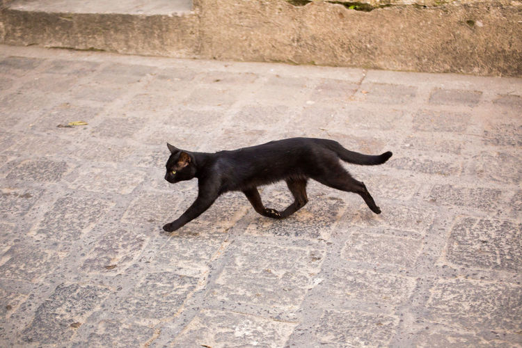 Side view of black dog cat