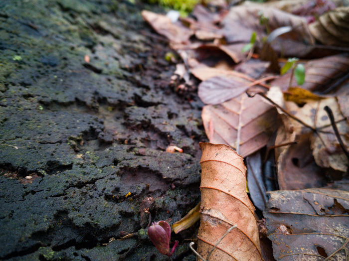 High angle view of dried autumn leaves on field