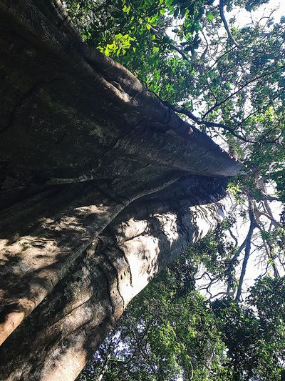 Costa Rica - Mars 2018 Rain Forest Forest Tree Sunlight Shadow Nature Day High Angle View No People Go Higher