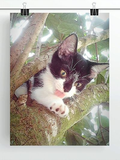 Cat Lovers Cats Of EyeEm Cat♡ Caturday Cats 🐱 Cats N Trees Catportrait Catoftheday Catlady Cat Watching Cute Cats Hanging Out I Love My Cat Mini Kitty Tiny Thomas Kittenlife Kittens N Trees Kitten #adorable Kittens <3 Cute Kitten Kitten 🐱 Kitteh
