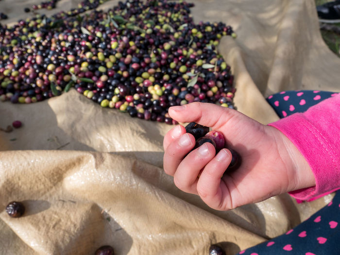 Cropped Image Of Girl With Olives On Field