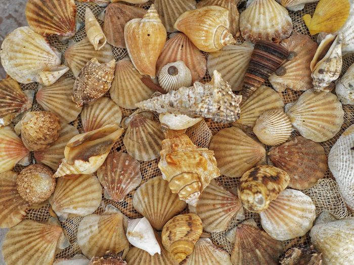 Full frame shot of various seashells on net