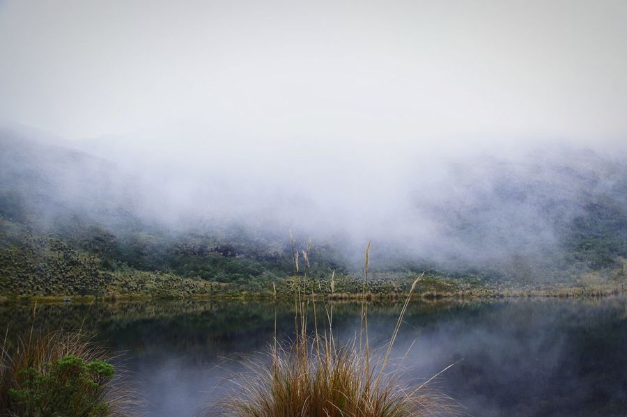 ☁ Colombia Andes Páramo Iguaque Mountainclimbing Beauty In Nature Conciousness  Mountains Hiking Frailejon Cold Temperature Water Tree Fog Lake Dawn Reflection Mountain Sky Landscape Cloud - Sky Smog Foggy Weather Mist Geology