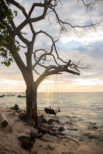Tree Plant Cloud - Sky Tranquility Beach Sunlight