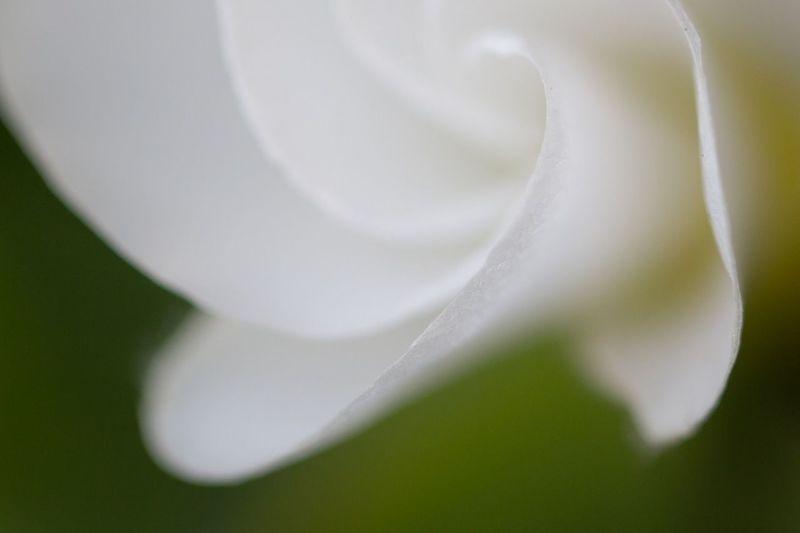 Macro_collection EyeEm Best Shots - Flowers Flowerporn Macroclique