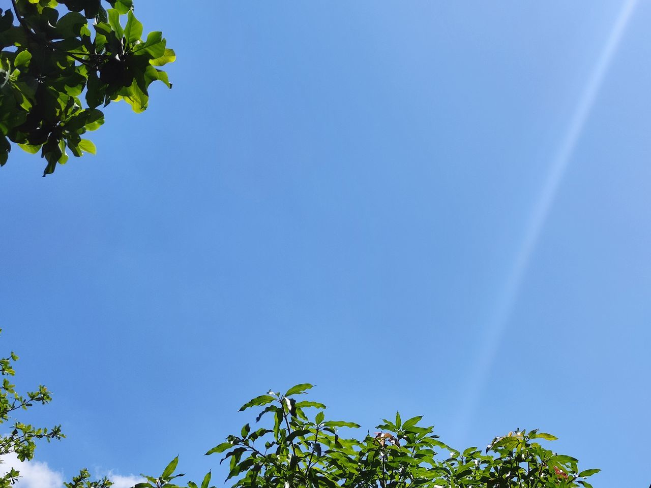 LOW ANGLE VIEW OF BLUE FLOWERING PLANT AGAINST CLEAR SKY