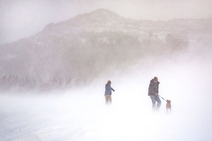 White Out Outdoors Snow Storm Mountain Life Winter Real People White Out Weather Mountains Mountain Life Wyoming Dog Walking The Dog