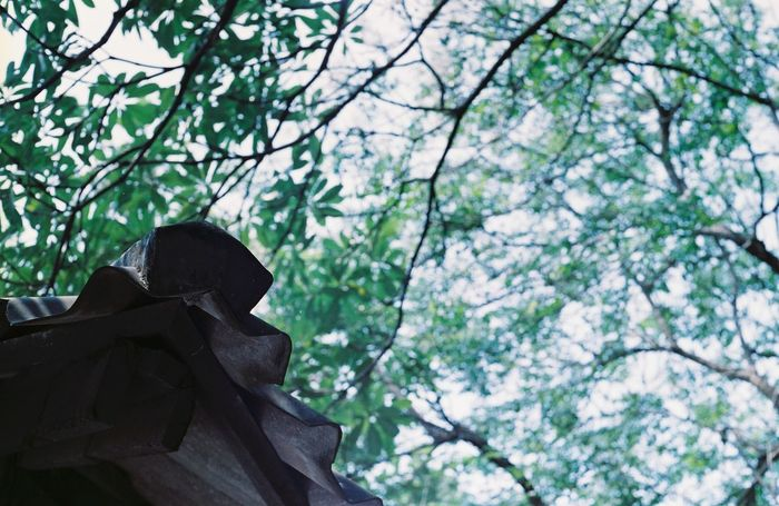 Through the leafs. Nevermore. Filmphotography Filmneverdies