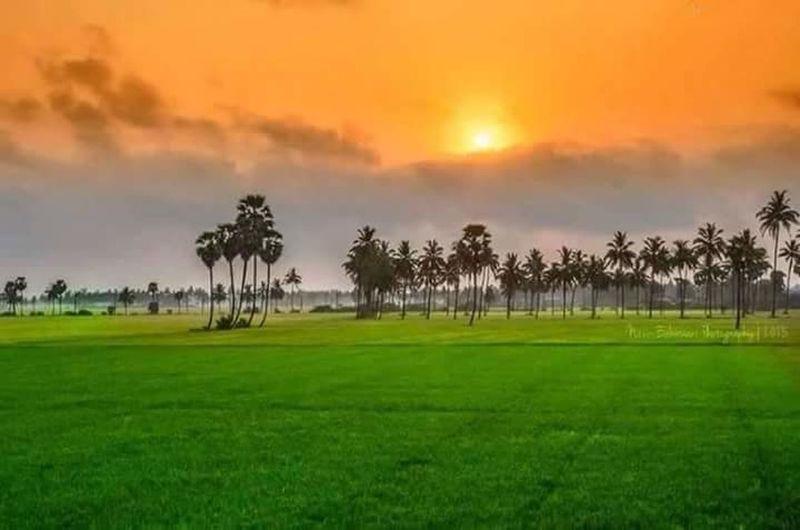 india flag in nature colour