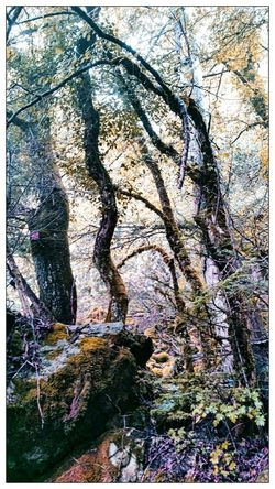 Eyem Nature Lover Trees Treescape Rocks Mountain Ramble in France Protecting Where We Play Automne Automn Colors