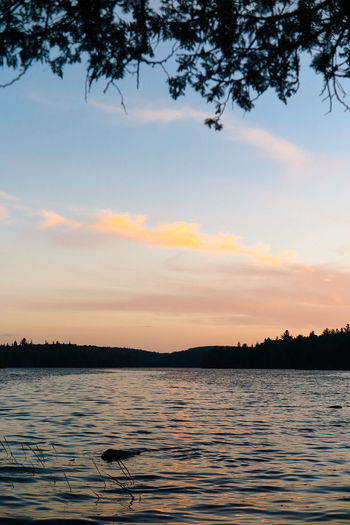 Algonquin Park Algonquinpark Algonquinprovincialpark Beauty In Nature Cloud - Sky Day Nature No People Outdoors Scenics Sea Silhouette Sky Sunset Tranquil Scene Tranquility Tree Water