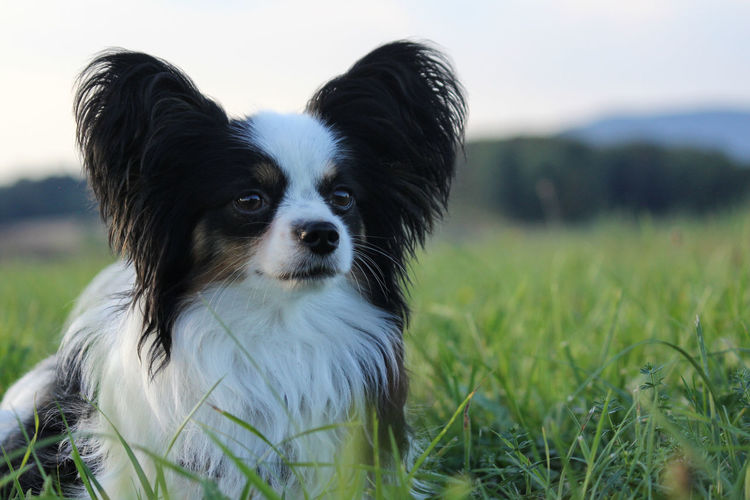 Close-up portrait of dog on field against sky