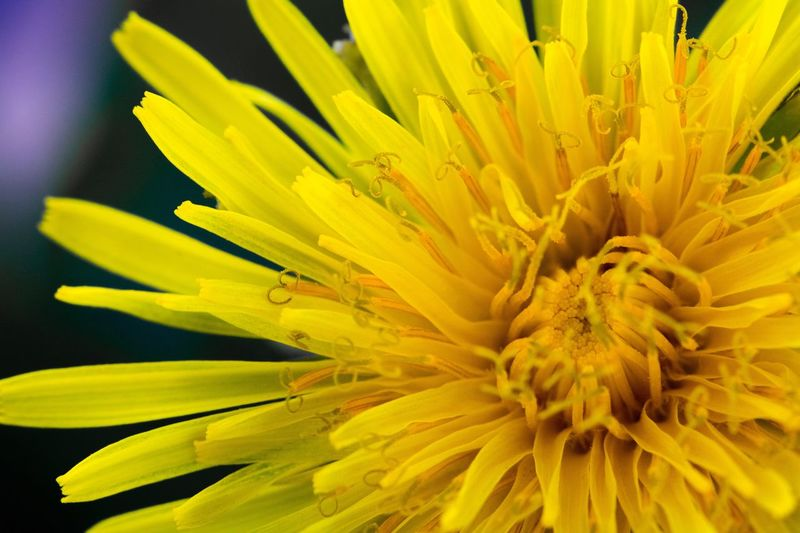 Flower Yellow Petal Fragility Flower Head Beauty In Nature Nature Close-up Freshness Pollen Growth Stamen Blossom Sunflower Plant Growth Beauty In Nature Plant No People Sunflower Pistil Outdoors Day