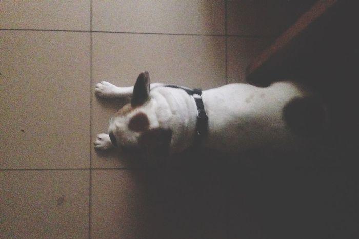 Formas Bella Bulldog Arriba Tumbarse Levantarse