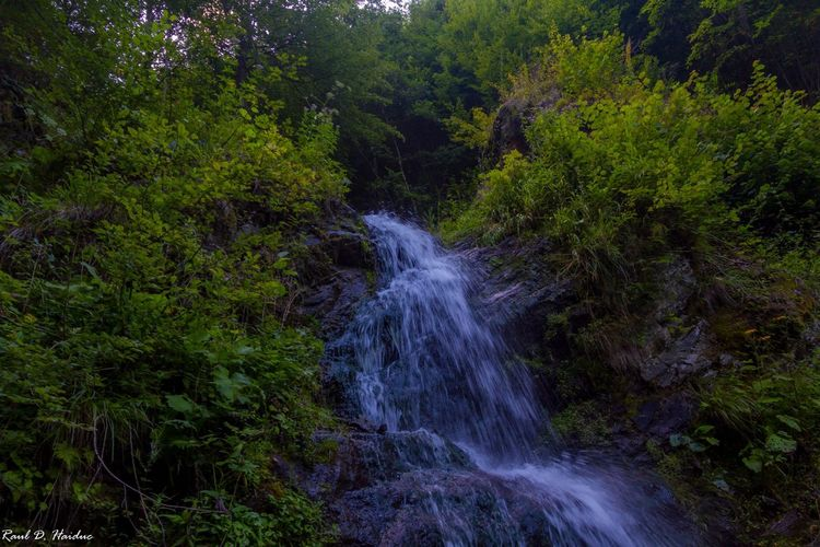 Frumos Growth Forest Scenics - Nature Motion Water Green Color Nature Tranquility Waterfall Splashing Outdoors Tranquil Scene Land No People First Eyeem Photo