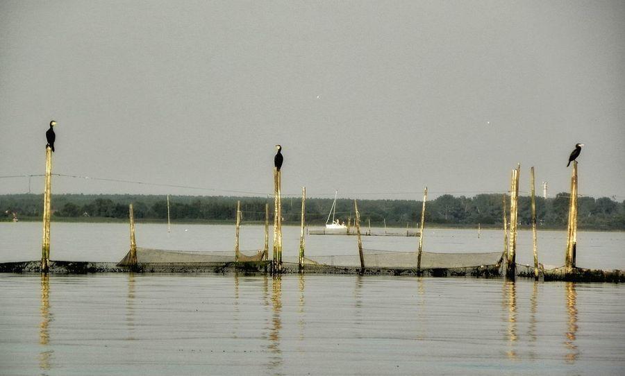 Enjoying Life TrzyKormorany Cormorants Three Czeka Sieci Rybackie Fishing Nets Ptaki Birds Czekając Na Obiad Waiting For A Dinner żeglowanie Sailing