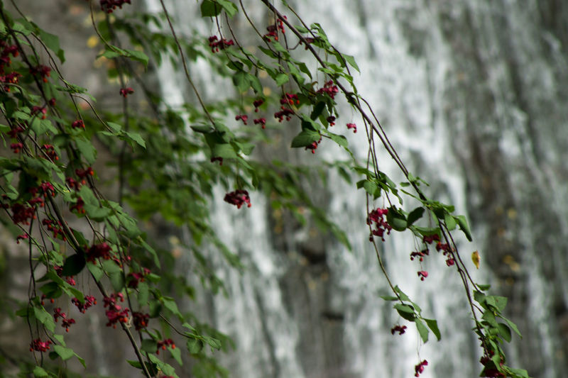 Güzeldere şelalesi Beauty In Nature Branch Flowering Plant Focus On Foreground Freshness Green Color Nature Outdoors Plant Selective Focus Waterfall
