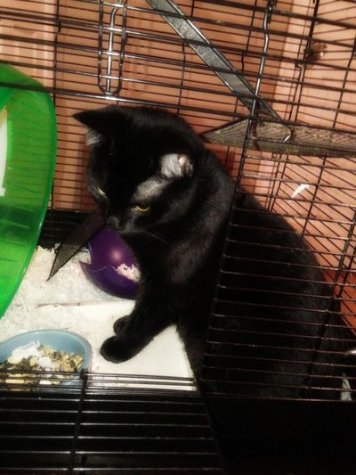 Soft Focus Black Cat Cat In Rat Cage Caught Cat White Bedding Black Cage Taking Care Of Pets Curiosity Hiding In Plain Sight Pets Symbolic  Irony