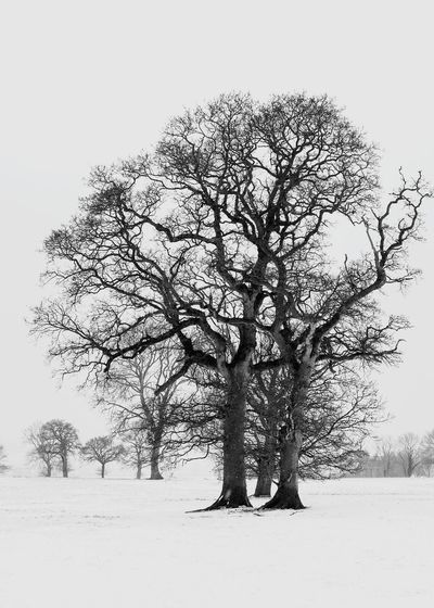 snow days Tree Winter Rural Scene Technology Abstract Sky Snow Covered Bare Tree Branch Tree Trunk Cold