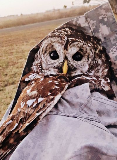 Rescued Owl Rescue Oklahoma Nature Oklahomaphotography Oklahoma Country Living Country Road Country Life Owls💕 Bird One Animal Animal Wildlife Animals In The Wild Animal Themes No People Close-up Nature Bird Of Prey Feather  Day Beak Looking At Camera Outdoors Owl Perching Mammal