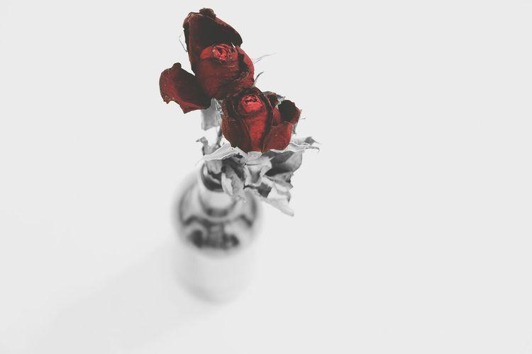 Roses Roses Are Red Rose🌹 Rose - Flower Roses, Flowers, Nature, Garden, Bouquet, Love, Roses🌹 Flowers Flower Flowerporn Blackandwhite Black And White Blackandwhite Photography Dried Rose Dried Roses Driedrose ToyBlack And White Photography Blacknwhite Roseblack Bowl Roserose Christmas Figurine  Red White Background
