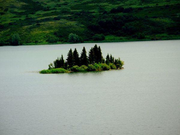 Russian Altaiski Krai Nature White Lake EyeEm Nature Lover Kolyvan Tree Water Sky Plant Green Color