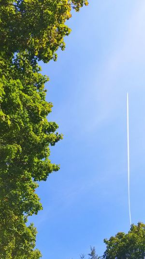 up up and away Blue Sky Airplaine Treetops Airplaine Cloud Vapor Trail Branch Clear Sky Sky Green Color