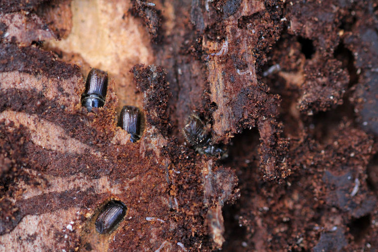 Full frame shot of beetle