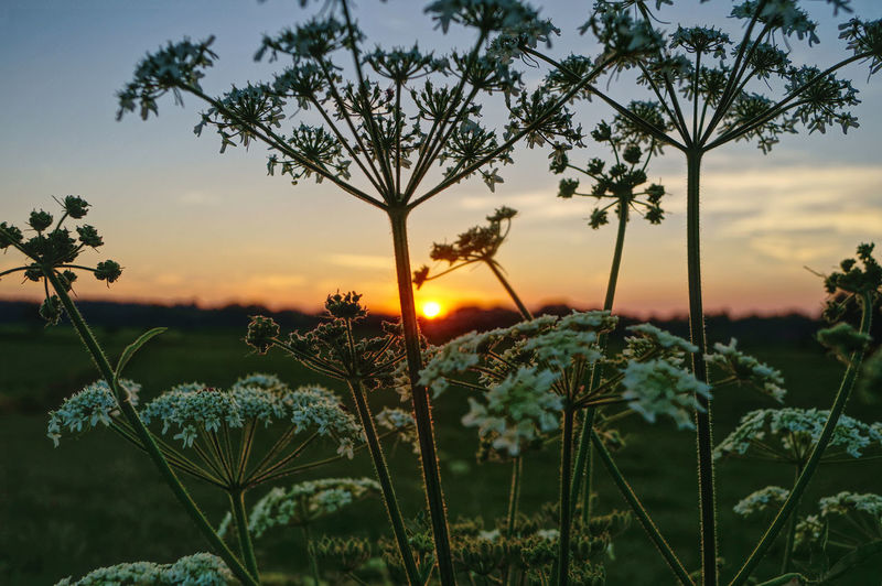 Evening Light EyeEm Nature Lover Wanderlust Beauty In Nature Close-up Contre-jour Evening Sky Field Flower Foreground Growth Nature No People Outdoors Plant Scenics Sky Springtime Sun Sunset Tranquil Scene Tranquility Visual Creativity