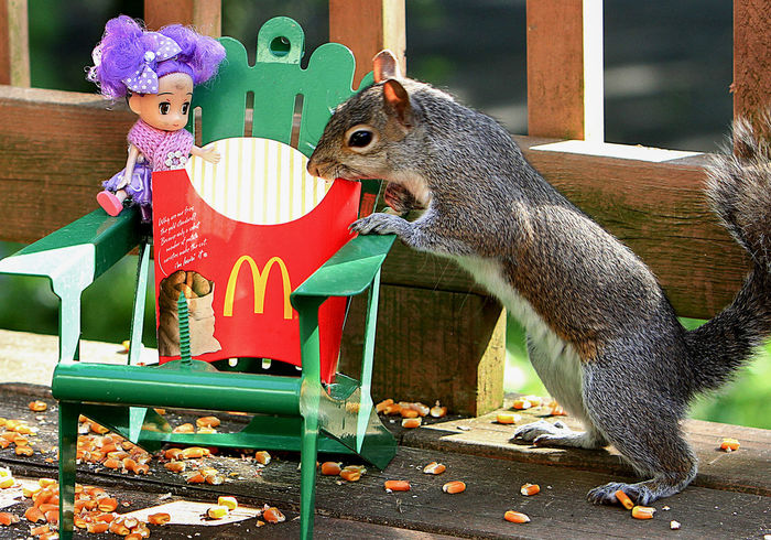 Who ate the fries Doll Funny McDonald's French Fries Squirrel Animal Themes French Fries Full Length Green Chairs Looking At Camera Mammal Miniature Chair Outdoors Portrait Whimsical